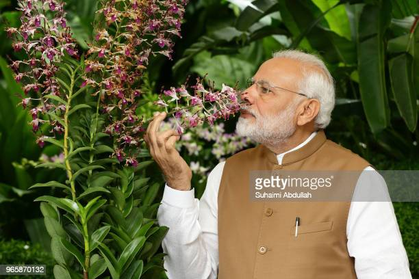 Indian Prime Minister Narendra Modi smells the orchid 'Dendrobium Narendra Modi', named after him during an orchid naming ceremony at the National...