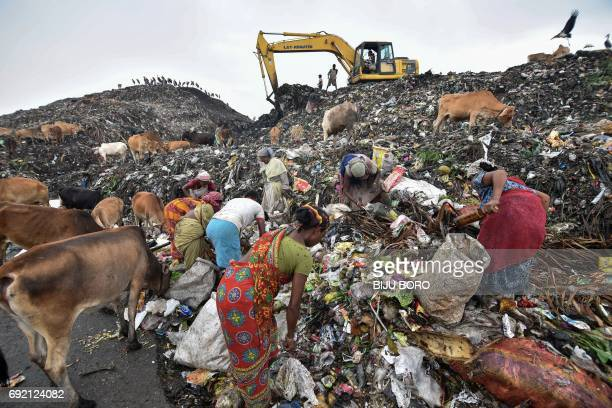 Indian ragpickers sort through garbage next to greater adjutant storks and cows at a large dump in the northeastern state of Assam in Guwahati on...