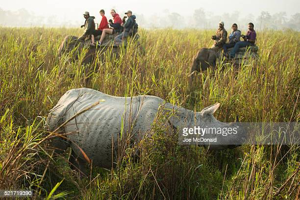 Indian Rhinoceros, aka One-horned Rhinoceros