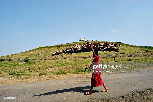 Indian Rural Village Woman Carrying Dry Braches Of Broken Tree On Her Head To Be Used As Fuel For Cooking At Nanded Maharashtra India