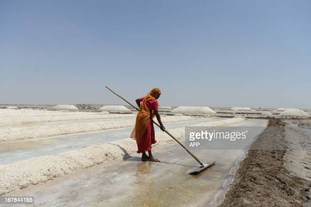 Indian salt pan worker Kamlaben salvages the mineral from flooded salt pans near Odu village in the Little Rann of Kutch region some 150 kms from...
