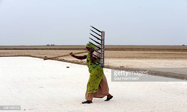 Indian salt pan worker Sanjuben Melabhai works at a salt pan in Khadaghoda Sector in the Little Rann of Kutch some 160 kms from Ahmedabad on February...
