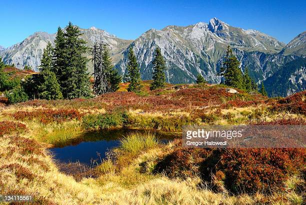 indian summer in alps - vorarlberg stock photos and pictures