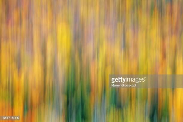 indian summer (blurred) - rainer grosskopf - fotografias e filmes do acervo