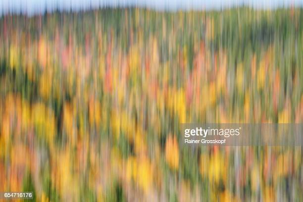 indian summer (blurred) - rainer grosskopf stock pictures, royalty-free photos & images