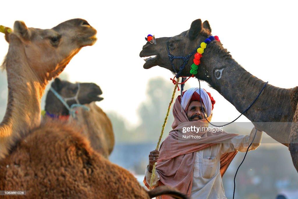 Camel Fair 2018 In Pushkar : News Photo