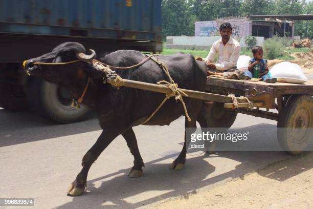 Indian traditional mode of transport