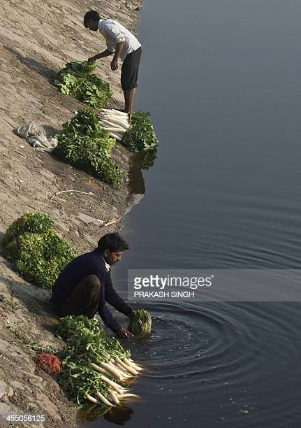 Indian vendors wash radishes spinich and other vegetables in a stream in New Delhi on December 11 2013 India expects to expand its exsisting food...