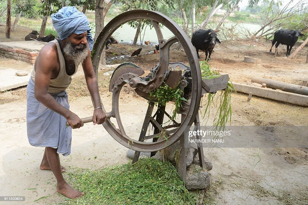 Indian villager Surjit Singh cuts animal fodder at the India/Pakistan border area village Chak Allah Bakash about 45km from Amritsar on September 30..