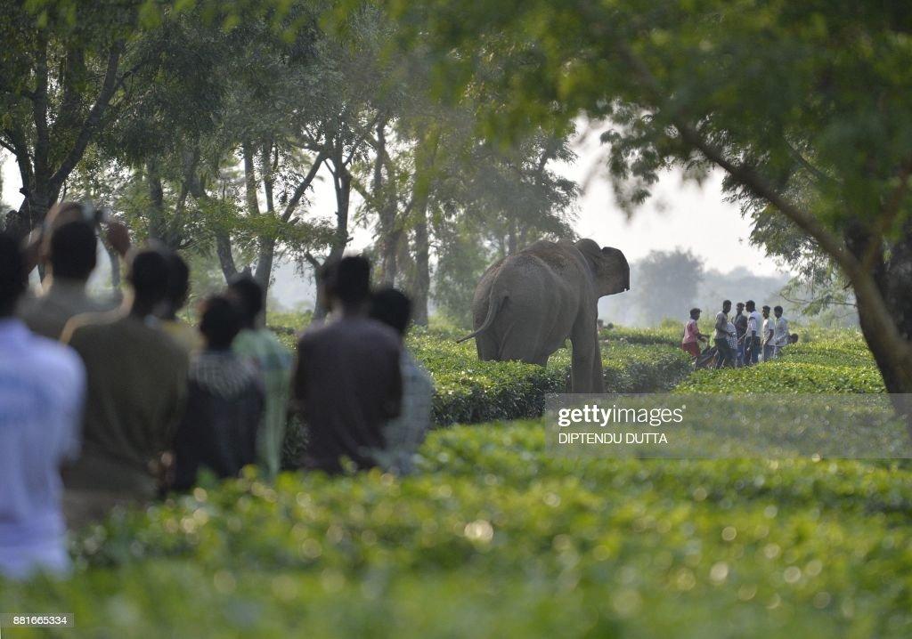 TOPSHOT-INDIA-WILDLIFE-ELEPHANT : News Photo