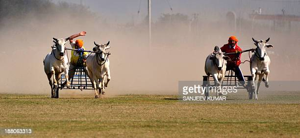 CONTENT] Indian villagers take part in bullock cart race during a rural sports festival also known as Indian Rural Olympics in Kila Raipur near...