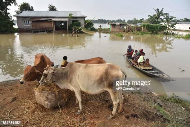 TOPSHOT Indian villagers travel on a boat as cattle are kept on the roadside in the flood affected Morigoan district in Indias northeastern state of...