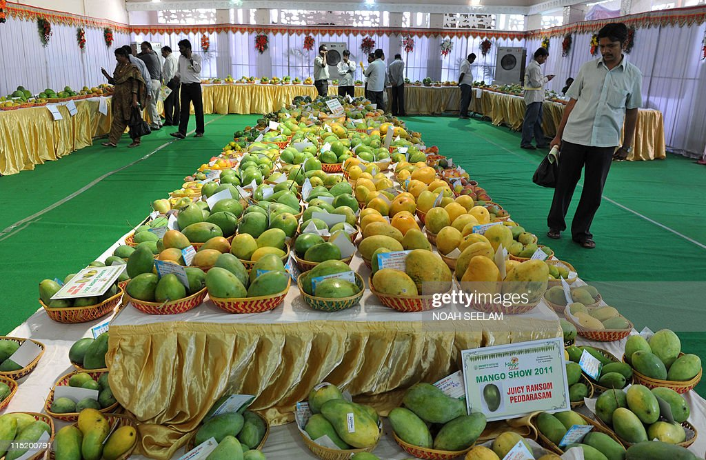 Indian visitors look at the different varieties of mangos