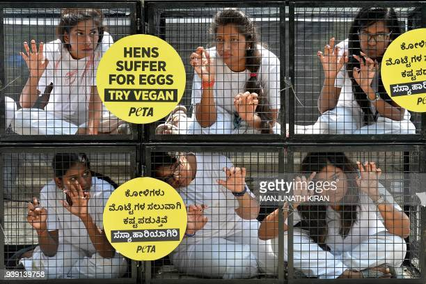Indian volunteers sit inside a cage during a PETA protest for the organisation's Go Vegan campaign in Bangalore on March 28 2018 The international...