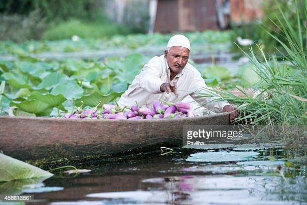 indian with eggplants in shikara - jammu and kashmir stock pictures, royalty-free photos & images