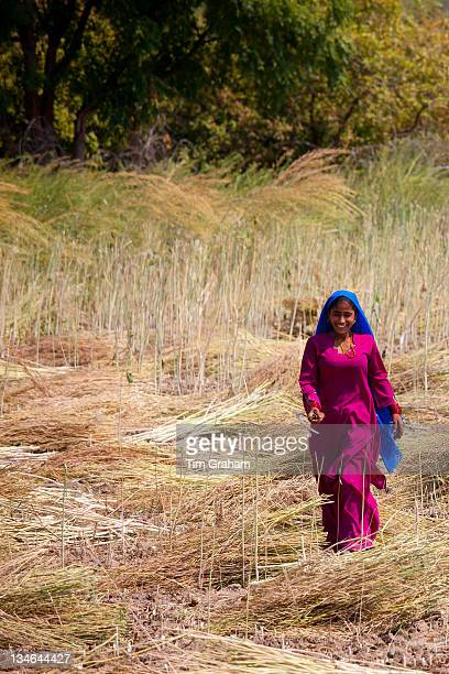 Indian woman agricultural worker at farm at Sawai Madhopur near Ranthambore in Rajasthan Northern India