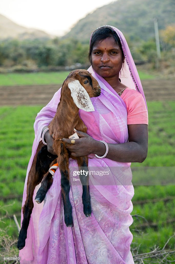 Indian woman holding a small goat, Udaipur, Rajasthan, India : Stock Photo