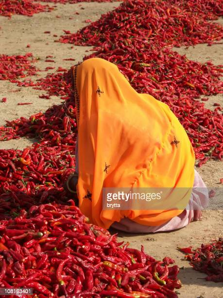 Indian woman inspecting red chili peppers,Rajasthan,India
