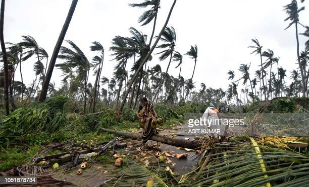 TOPSHOT Indian women carry coconuts next to fallen palm trees after heavy winds brought by Cyclone Titli struck the area in Barua village in...