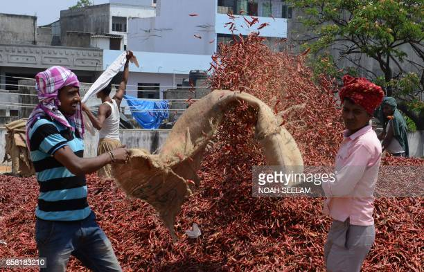 Indian workers open a sack of dried red chillies at a wholesale market in Hyderabad on March 27 2017 Despite a bumper harvest of red chillies farmers...