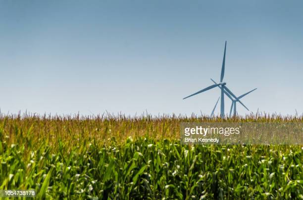 indiana corn field and wind turbines - midwest usa stock pictures, royalty-free photos & images