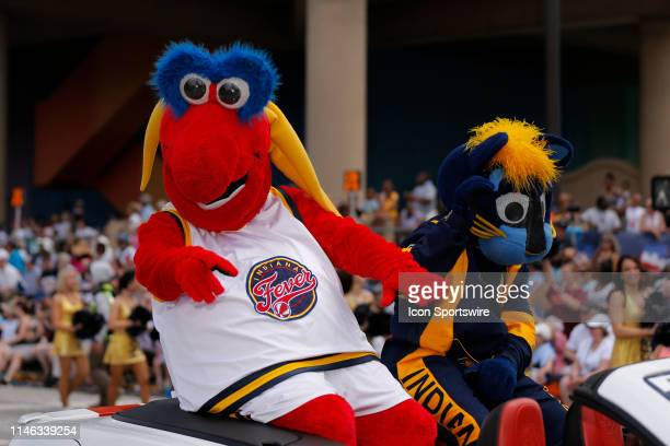 Indiana Fever Mascot Freddy Fever and Indiana Pacer Mascot Boomer during the 500 Festival Parade on May 25 in downtown Indianapolis Indiana.