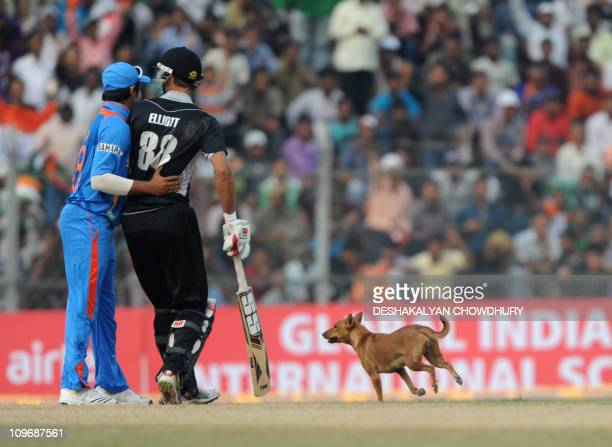 India's Suresh Raina and New Zealand's Grant Elliott react as a stray dog runs past them stopping the match for a minute during the first one-day...