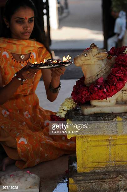 IndiasciencemedicineresearchcowsFEATURE by Rupam Jain Nair This photo taken on February 1 2010 shows an Indian woman performing the Nandi Puja ritual...