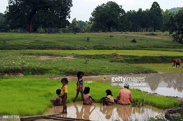 IndiaunrestMaoistFEATURE by Abhaya Srivastava In this photo taken on August 7 Indian villagers work in a paddy field in the Tisro area of Giridih...