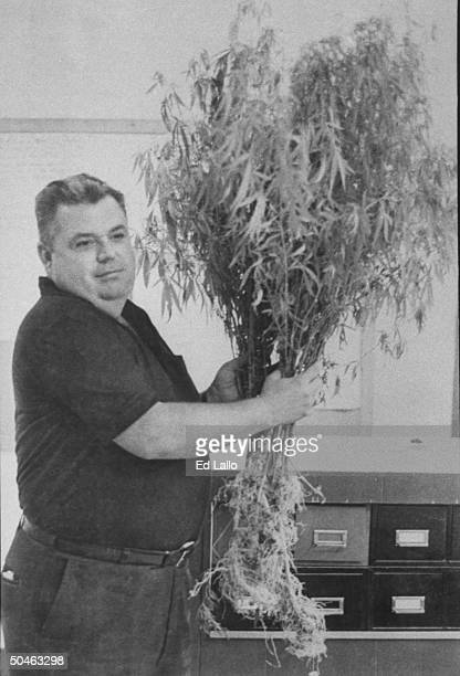 Indicted Mingo County Sheriff Eddie Hilbert holding up a large uprooted marijuana plant he has just confiscated from the Preece family who run a...