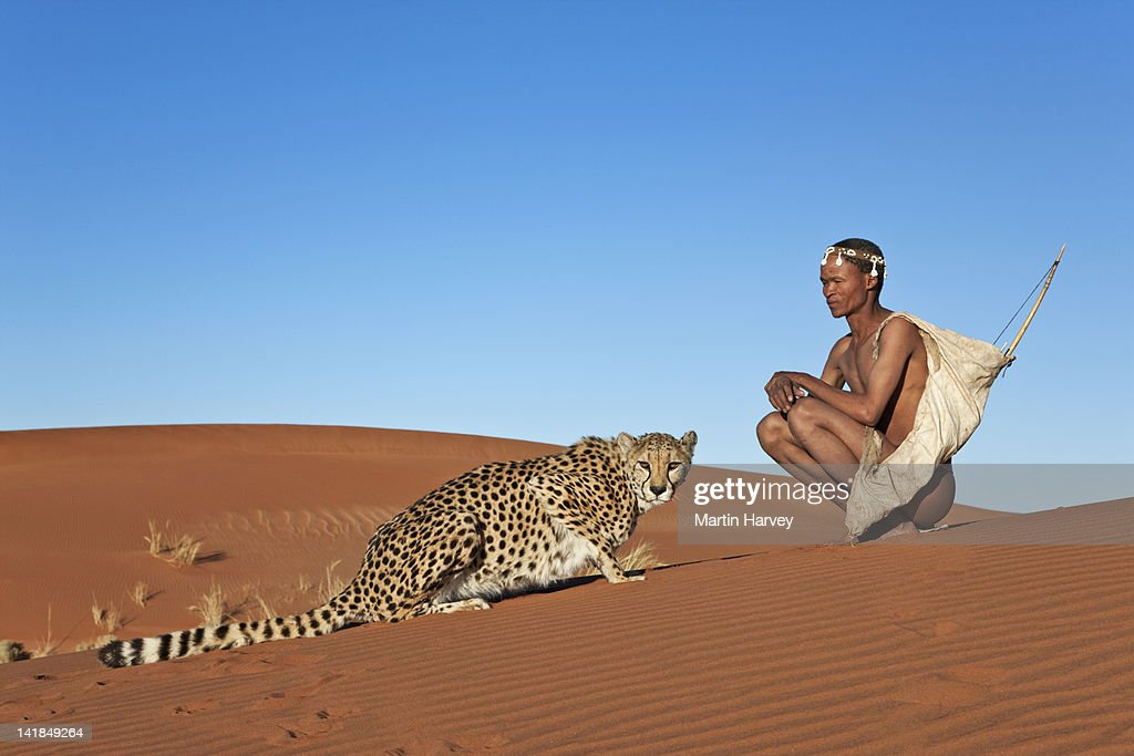Indigenous Bushman/San hunter (43 years old) hunting with cheetah (Acinonyx jubatus), Namibia (Image taken to raise awareness and funds for the conservation projects of N/a' : Stock Photo