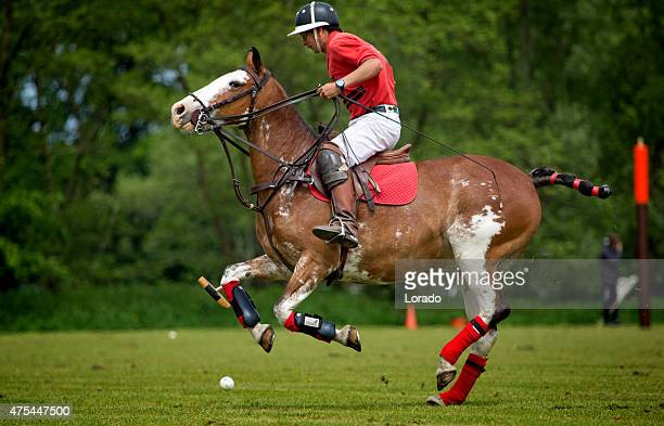 pitchers of horses stock photos and pictures getty images