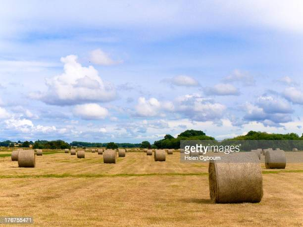 CONTENT] Individual round hay bales under a blue sky with white clouds on a summer day in a farm field