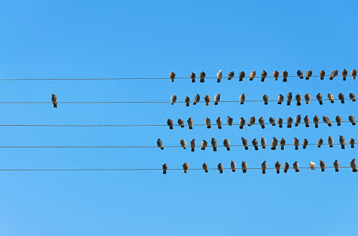 Individuality concept, birds on a wire 911807984