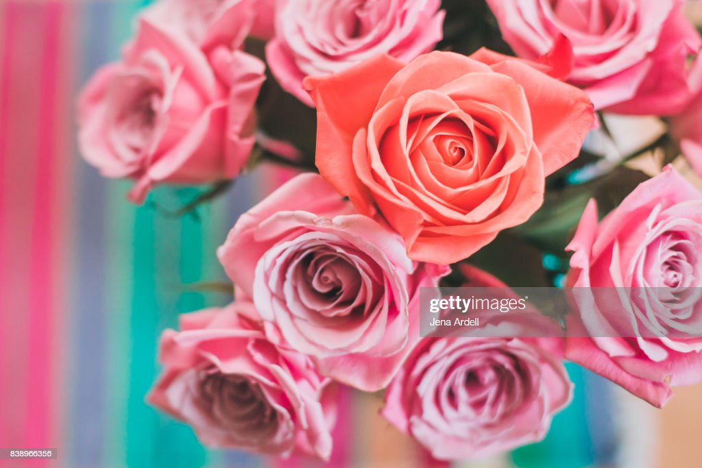 Individuality Concept Pink Roses In A Vase : Stock Photo