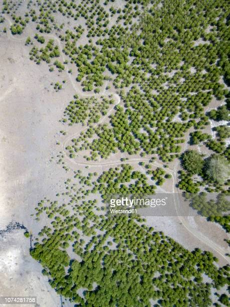 Indonesia, Aerial view of Lombok, paths and bushes