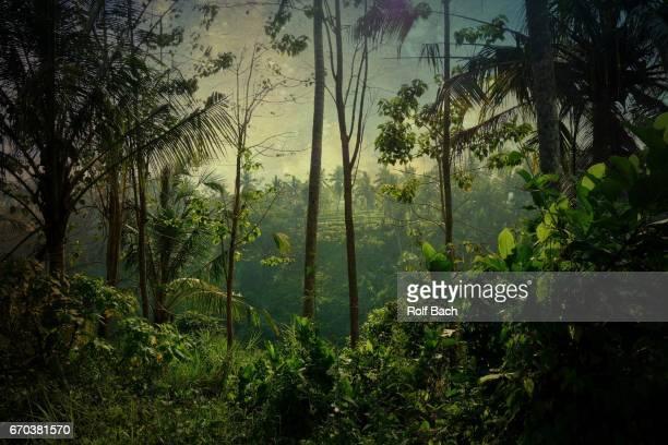 indonesia, bali - island of gods and spices, wonderful scenery around ubud - ubud district stock pictures, royalty-free photos & images
