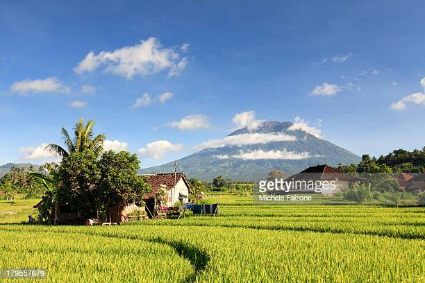Indonesia, Bali, Rice Terraces and Volcanoes