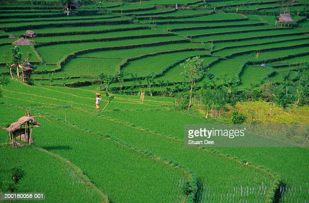 indonesia, bali, rice terraces, elevated view - travel14 stock pictures, royalty-free photos & images