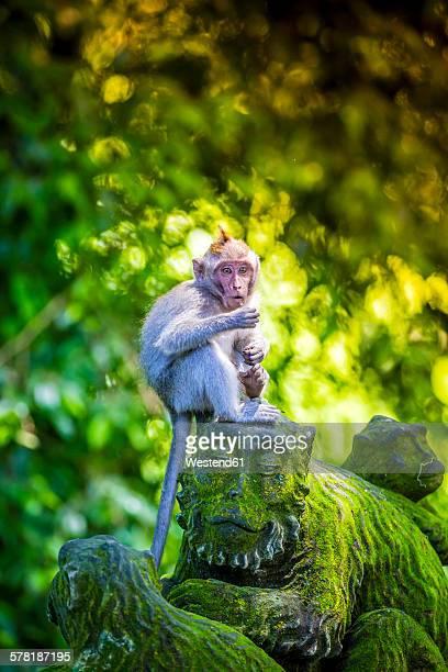 Indonesia, Bali, Ubud, monkey at Sacred Monkey Forest sitting on monkey sculpture