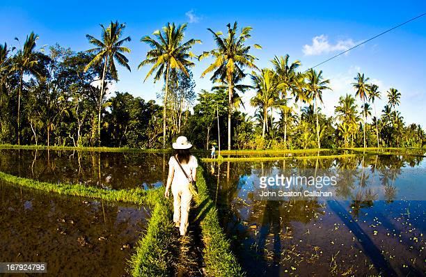 Indonesia, Bali, woman walking in rice fields.