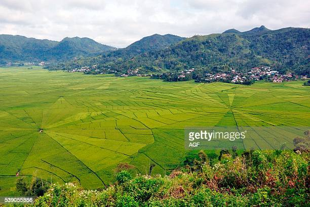 Indonesia Flores island Ruteng rice fields