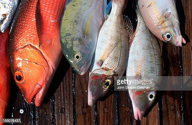 Indonesia, fresh fish.