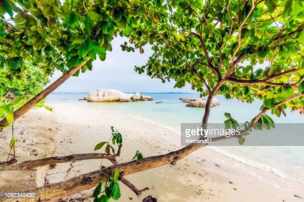 indonesia, riau islands, bintan, beach - riau images - fotografias e filmes do acervo