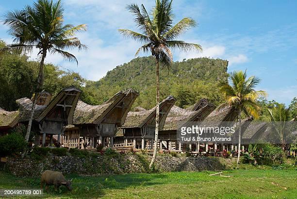 Indonesia, Sulawesi, Celebes Island, Tana Toraja, Ke'te Kesu, houses