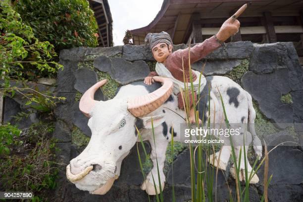 Indonesia Sulawesi Selatan Toraja utara rider on a water buffalo
