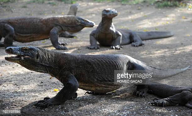 Indonesia-animals-environment-tourism FEATURE by Jerome RivetA photo taken on December 3, 1010 shows Komodo dragons on Rinca island part of the...