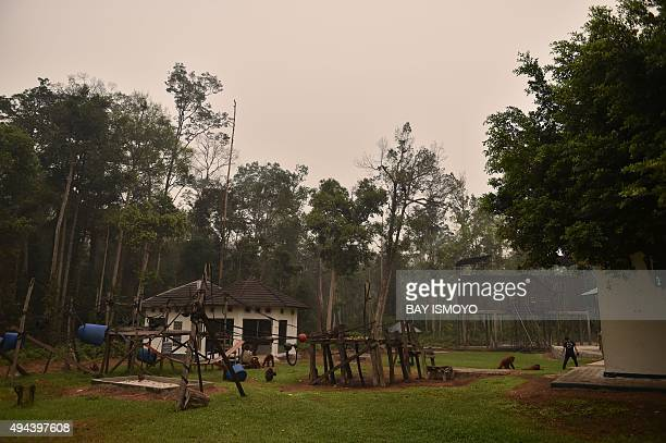 IndonesiaenvironmentpollutionanimalFOCUS by Dessy Sagita This photo taken on October 26 2015 shows haze caused by forest and peatland fires hanging...