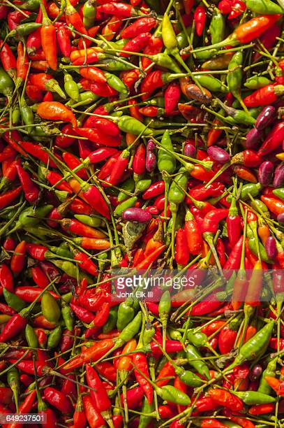 indonesian chilis - rantepao stock photos and pictures
