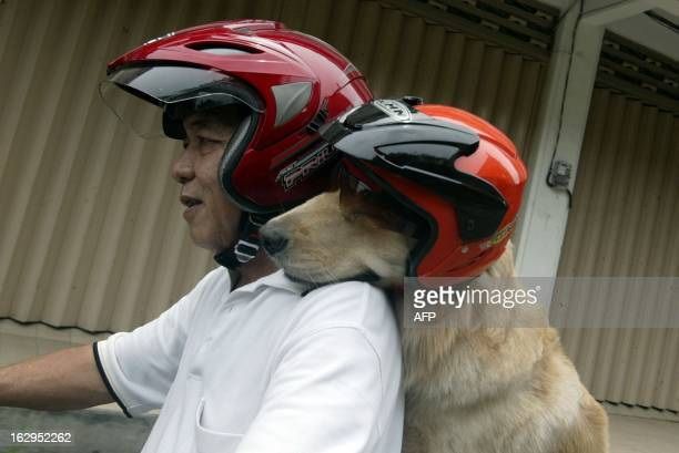 Indonesian dog lover Handoko Njotokusumo and Ace ride through traffic during their weekend joy ride on a motorcycle in Surabaya located in eastern...